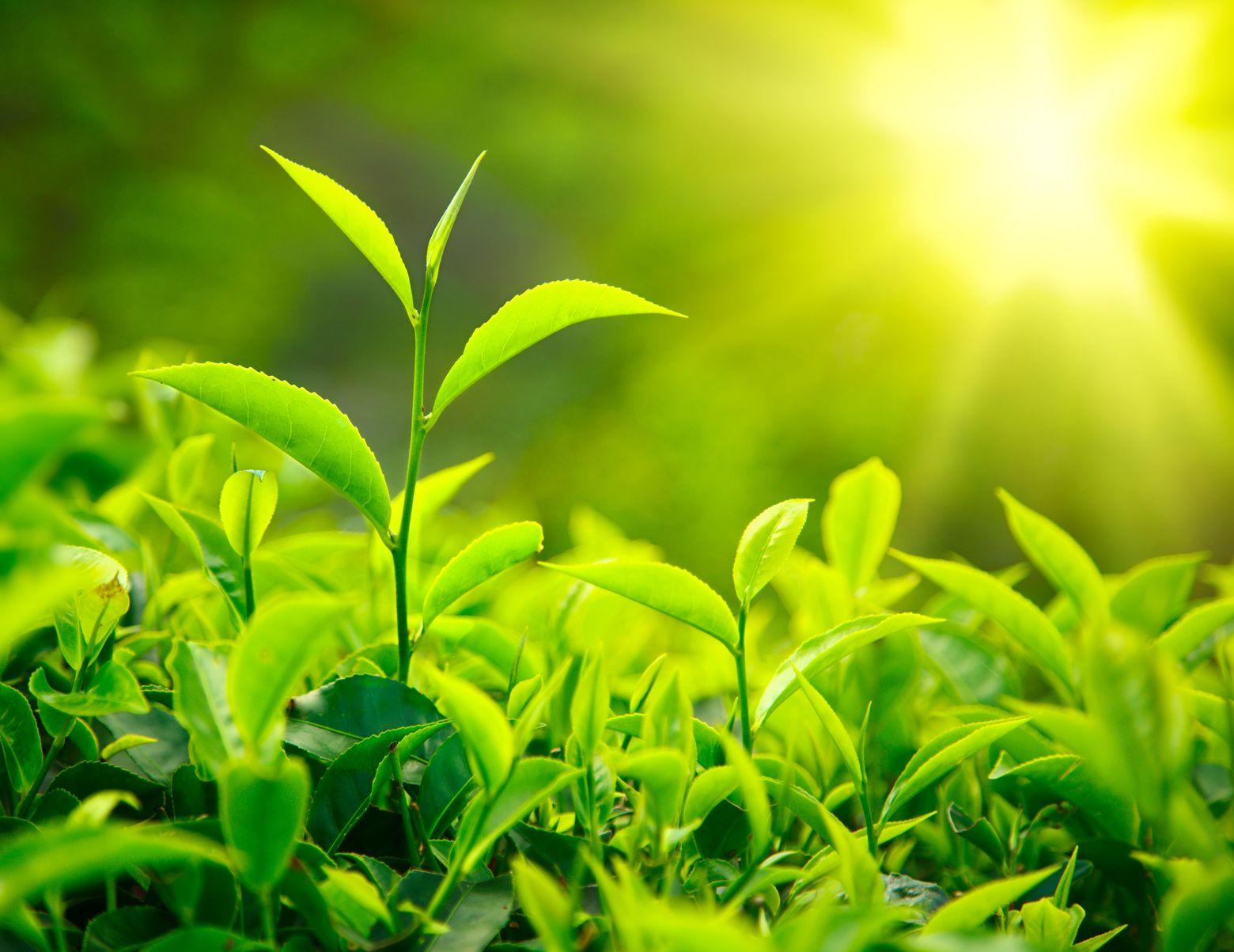 """Innenarchitektur Grüne Pflanzen Foto Von Die """"grüne Pflanze"""" In Liwo"""